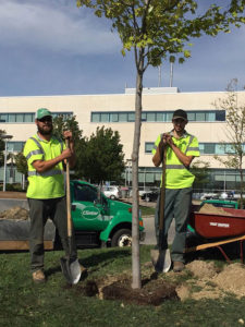 Clintar Brampton finishing up tree planting at Brampton Civic Hospital.