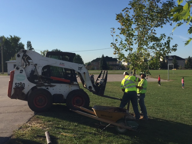 Clintar Kitchener planting the new tree in the playground at Breslau Public School.