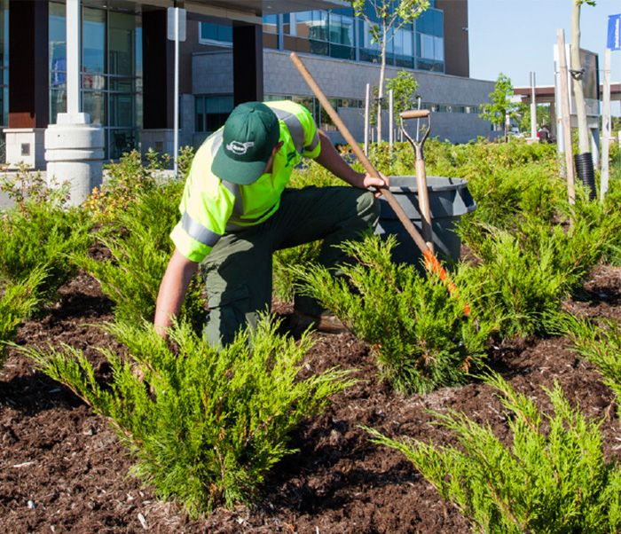 Why Mulch? The Benefits of Mulching
