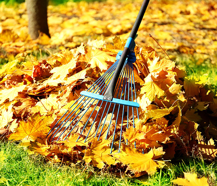 Commercial Property Fall Clean Ups Done Right